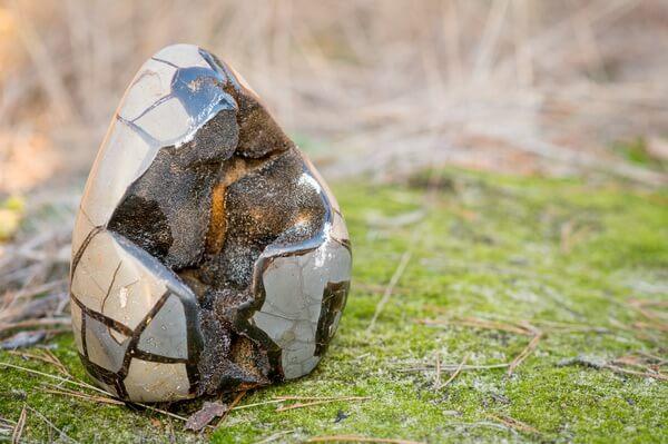 Septarian egg on grass